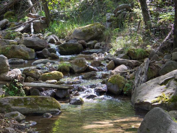 Stream; Babbling Brook; Rocks; Moss; Ferns; Grass; Forest; Greenery; See Canyon Hiking Trail; See Spring Hiking Trail, Payson; Arizona; Mogollon Rim; Moderate Hiking Trails; Pet Friendly HIking Trails; Central Arizona; Copyright azutopia.com; No use without permission.
