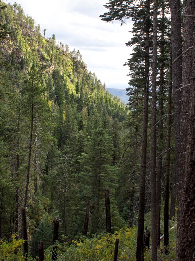 See Canyon Hiking Trail; Payson; Arizona; Mogollon Rim; Pine Trees; Wildflowers; Ravine; View; Moderate Hiking Trails; Pet Friendly HIking Trails; Central Arizona; Copyright azutopia.com; No use without permission.