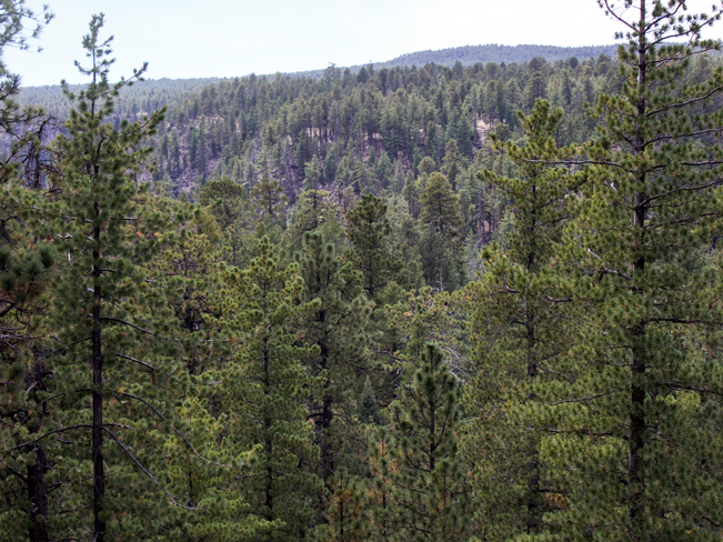 See Canyon Hiking Trail; Payson; Arizona; Mogollon Rim; Rim View; Moderate Hiking Trails; Pet Friendly HIking Trails; Central Arizona; Pine Trees; Ravine; Forest; Copyright azutopia.com; No use without permission.