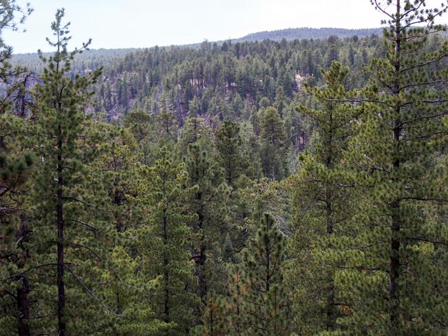 See Canyon Hiking Trail; Payson; Arizona; Mogollon Rim; Rim View; Moderate Hiking Trails; Pet Friendly HIking Trails; Central Arizona; Pine Trees; Ravine; Forest; Copyright azutopia.com; No use without permission.