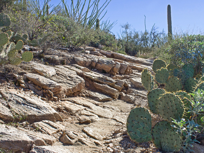 Rock Slabs; Rocky Trail; Prickly Pear Cacti; Saquaros; Ocotillos; Blacketts Ridge Hiking Trail; Sabino Canyon; Santa Catalina Mountains; Tucson; Arizona; Difficult Hiking Trails; Tucson Area Hiking Trails; Copyright azutopia.com; No use without permission.