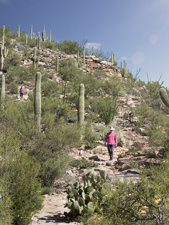 Hikers; Steep Rocky Trail; False Peak; Blacketts Ridge Hiking Trail; Sabino Canyon; Santa Catalina Mountains; Mountain View; Tucson; Arizona; Difficult Hiking Trails; Tucson Area Hiking Trails; Copyright azutopia.com; No use without permission.