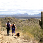 Hikers with their dog; Views of Blue Skies and McDowell Mountains in distance; Desert; Dixie Mountain Hiking Trail; Sonoran Desert Preserve; Phoenix; Arizona; Saquaros; Moderate Hiking Trails; Family Friendly Hiking Trails; Copyright azutopia.comNo use without permission.
