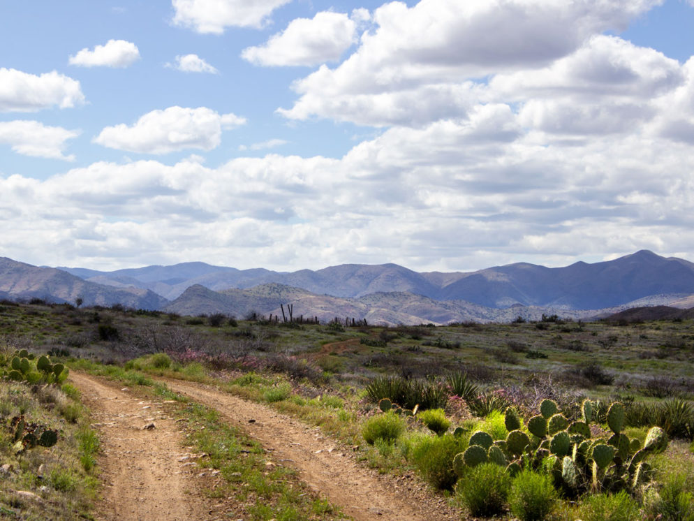 Landscape view; Blue skies; Clouds; Dirt Road; Prickly Pear Cactus; Grassland; Prairie; Cattle Pen; Bradshaw Mountains . Black Canyon Hiking Trail; Mayer; Central Arizona; Drinking Snake Trail Segment; Easy Hiking Trails. Copyright azutopia.com. No use without permission.