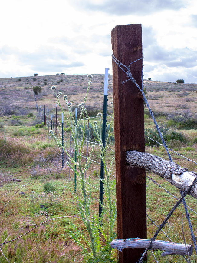 Landscape view; Cloudy Sky; Rustic Cattle Fence; Rolling Hills; Thistle; Prairie; Black Canyon Hiking Trail; Mayer; Central Arizona; Drinking Snake Trail Segment; Easy Hiking Trails. Copyright azutopia.com. No use without permission.
