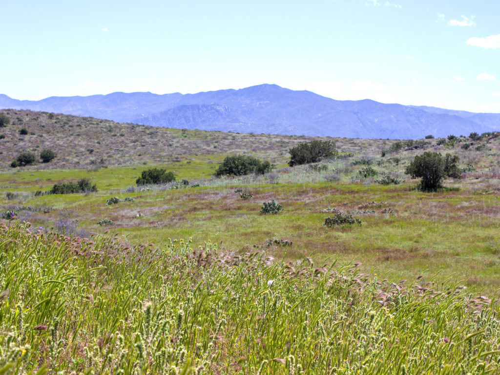 Landscape view; Blue skies; Clouds; Green Grass; Scrubbrush; Grassland; Prairie; Bradshaw Mountains . Black Canyon Hiking Trail; Mayer; Central Arizona; Drinking Snake Trail Segment; Easy Hiking Trails. Copyright azutopia.com. No use without permission.
