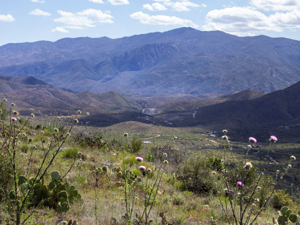 Landscape view; Blue skies; Clouds; Valley; Prickly Pear Cactus; Thistle; Bradshaw Mountains . Black Canyon Hiking Trail; Mayer; Central Arizona; Drinking Snake Trail Segment; Easy Hiking Trails. Copyright azutopia.com. No use without permission.