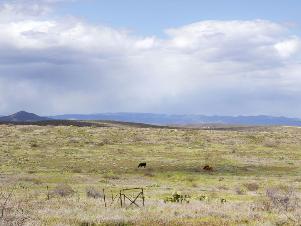 Landscape view; Blue skies; Rain clouds; Grassland; Prairie; Cows; Mountains behind. Black Canyon Hiking Trail; Mayer; Central Arizona; Drinking Snake Trail Segment; Easy Hiking Trails. Copyright azutopia.com. No use without permission.