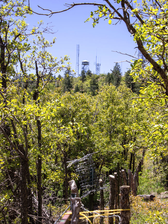 Landscape view of Union Mountain Fire Tower; above Oak Trees; Pines and rustic fence; from the Yankee Doodle Hiking Trail.; Prescott; Arizona; Dandrea and Yankee Doodle Hiking Trails; Moderate Hiking Trails; Central Arizona Hiking Trails. Copyright azutopia.com. No use without permission.