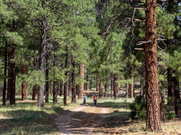 Hikers with their dog on the Schultz Creek Hiking Trail; Wide Pathway, Beneath tall Ponderosa Pines, Dry Lake Hills; Flagstaff; Arizona; Easy to Moderate Hiking Trails; Dog Friendly Hiking Trails; Northern Arizona Hiking Trails; Copyright azutopia.com; No use without permission.