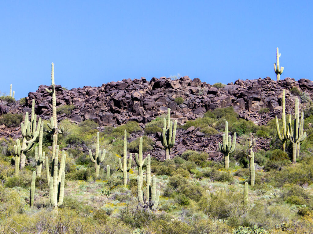 Landscape view, Long Basalt Cliff, with Tall Saguaros, Palo Verde and Scrub in front, Blue Sky, Superstition Mountains, Black Mesa Hiking Trail Loop, Grand Enchantment Hiking Trail, Second Water Hiking Trail, Apache Junction, Arizona, Copyright azutopia.com, No use without permission