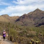 Hiker, Gateway Hiking Trail Loop, South side, Arizona, Scottsdale, Phoenix Area Hiking Trail, Moderate Hiking Trail, Dog Friendly Hiking Trail, McDowell Mountains, Thompson Peak in distance, Saguaros, Copyright azutopia.com, No use without permission