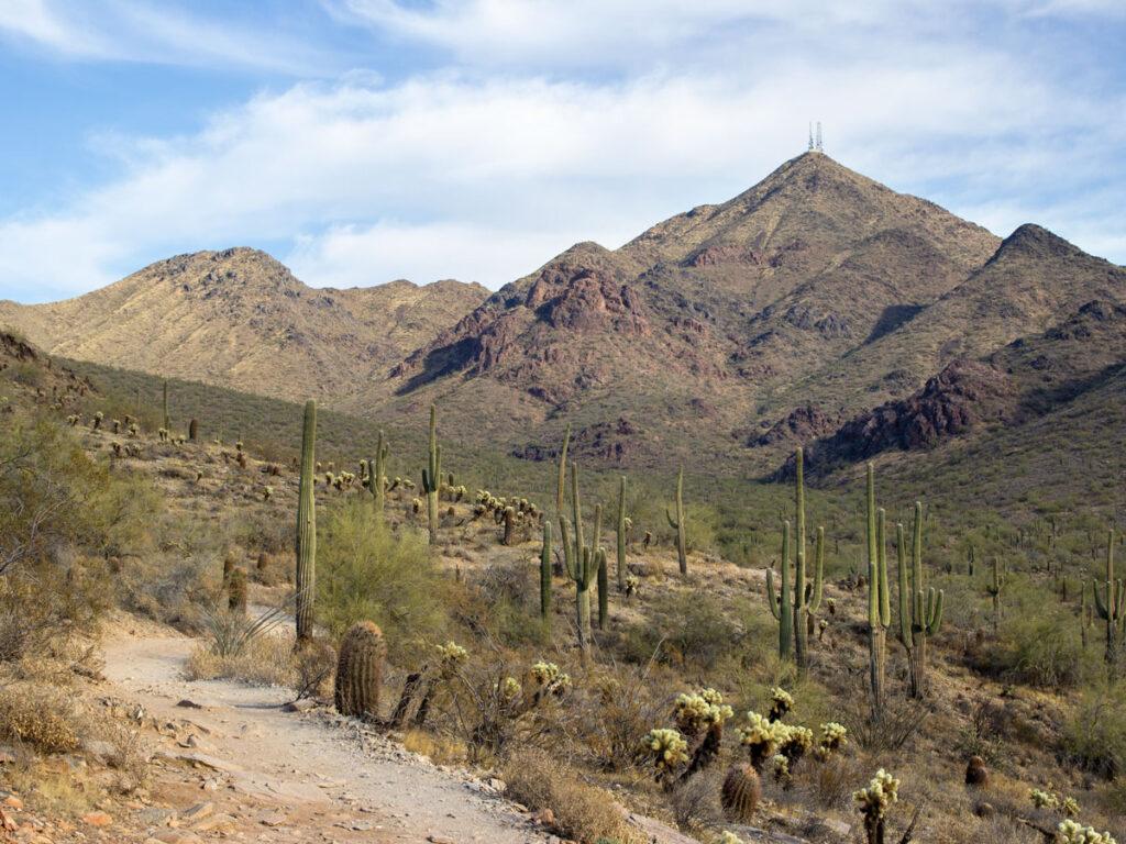 Gateway Hiking Trail Loop, South side, Arizona, Scottsdale, Phoenix Area Hiking Trail, Moderate Hiking Trail, Dog Friendly Hiking Trail, McDowell Mountains, Thompson Peak in distance, Saguaros, Copyright azutopia.com, No use without permission